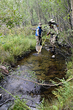 Two people wearing Fish and Wildlife uniforms stand in a shallow mountain stream, surrounded by lush Alpine vegetation