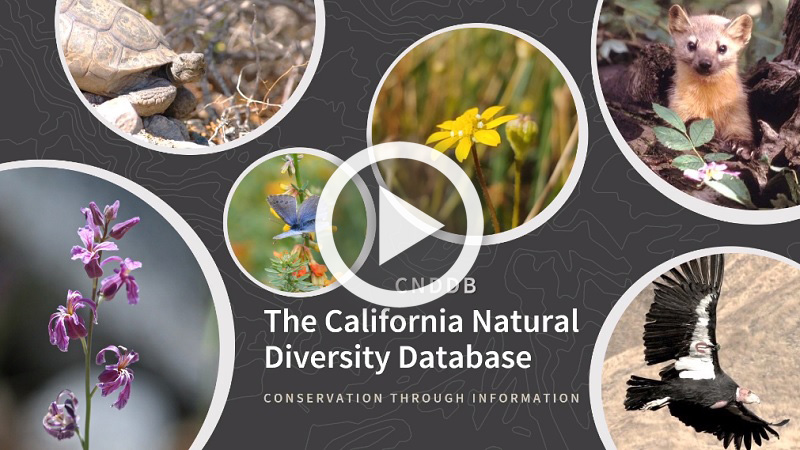 A collage of rare plants and animals surrounding the words CNDDB California Natural Diversity Database, Conservation Through Information