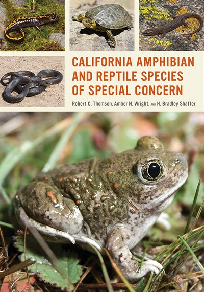 Collage of amphibians and reptiles