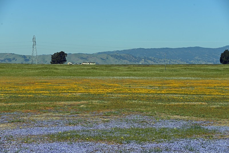 A field filled with wildflowers.