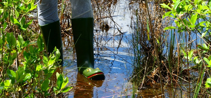 Person with frog boots in a marshy pond