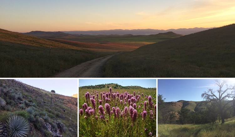 Collage of various habitats of Carrizo Plains