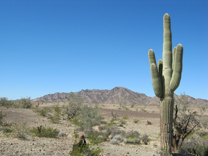Photo of saguaro in the desert by Duncan S. Bell