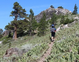 Hiker on Pacific Crest Trail