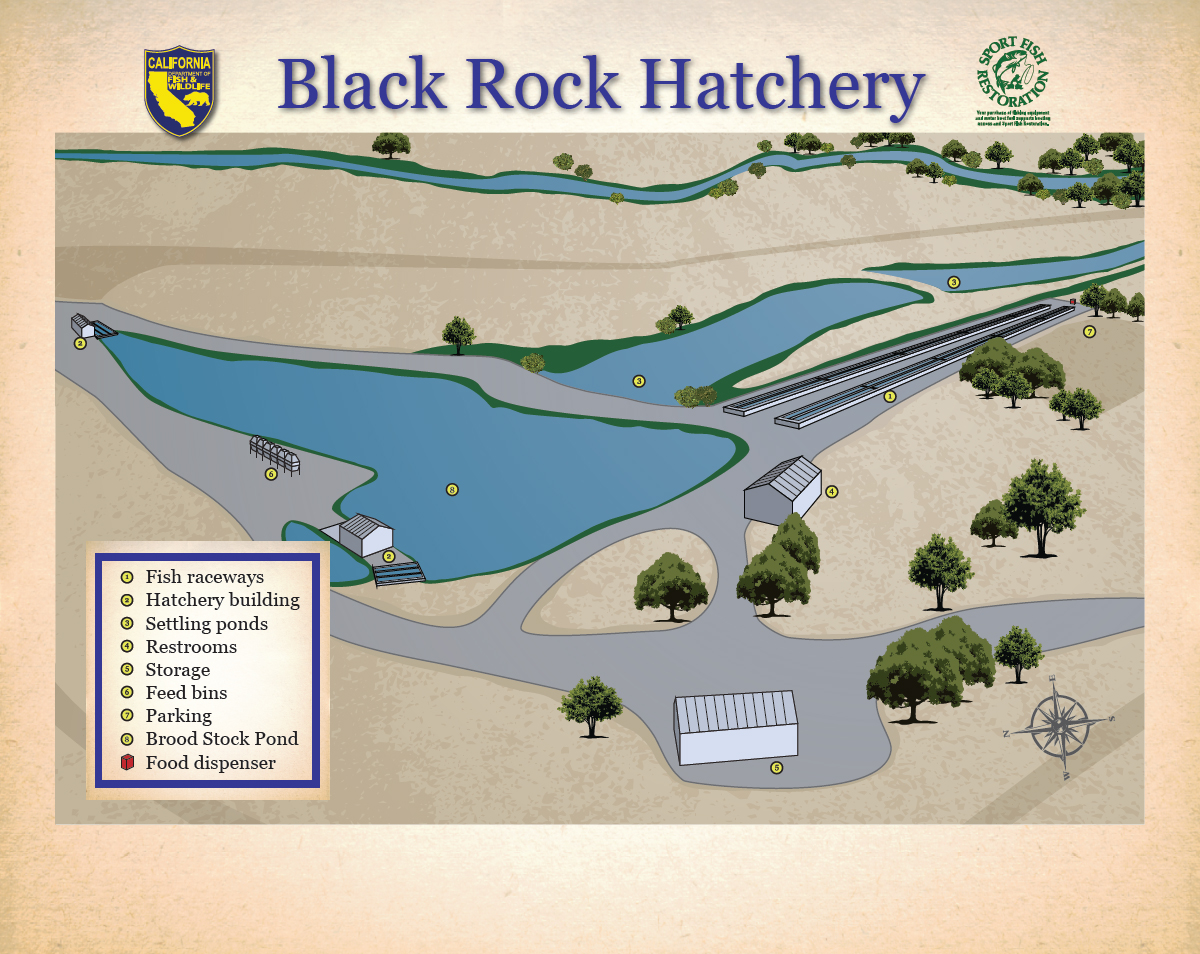 Black rock trout hatchery for California fish hatcheries