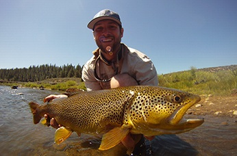 Brown trout photograph by Dave Lass