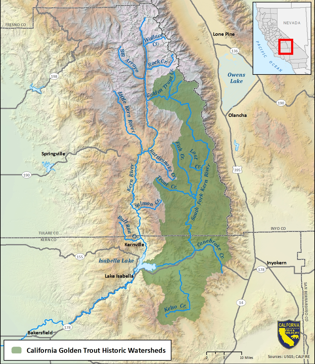 Map of California golden trout historic watersheds-link opens in new window