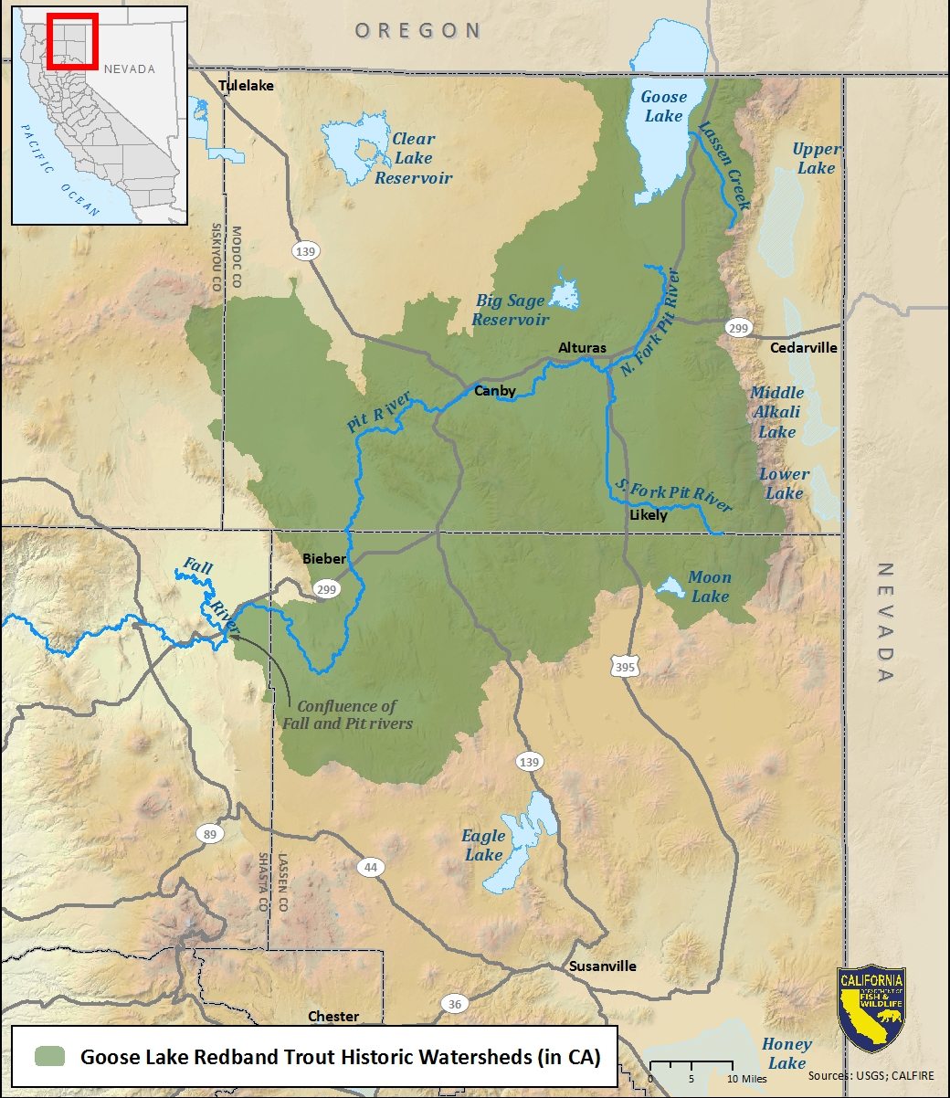 Map of Goose Lake redband trout historic watersheds - click to enlarge in new window
