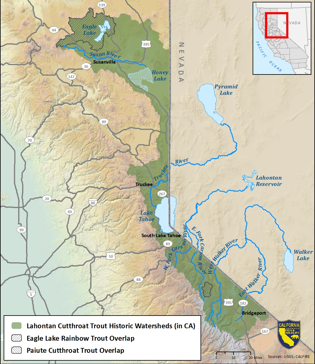 Map of Lahontan cutthroat trout historic watersheds  - click to enlarge in new window