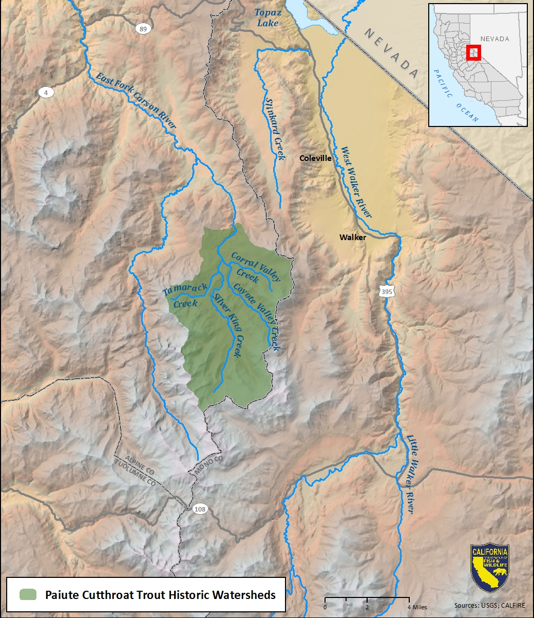 Map of Paiute cutthroat trout historic watershed-link opens in new window