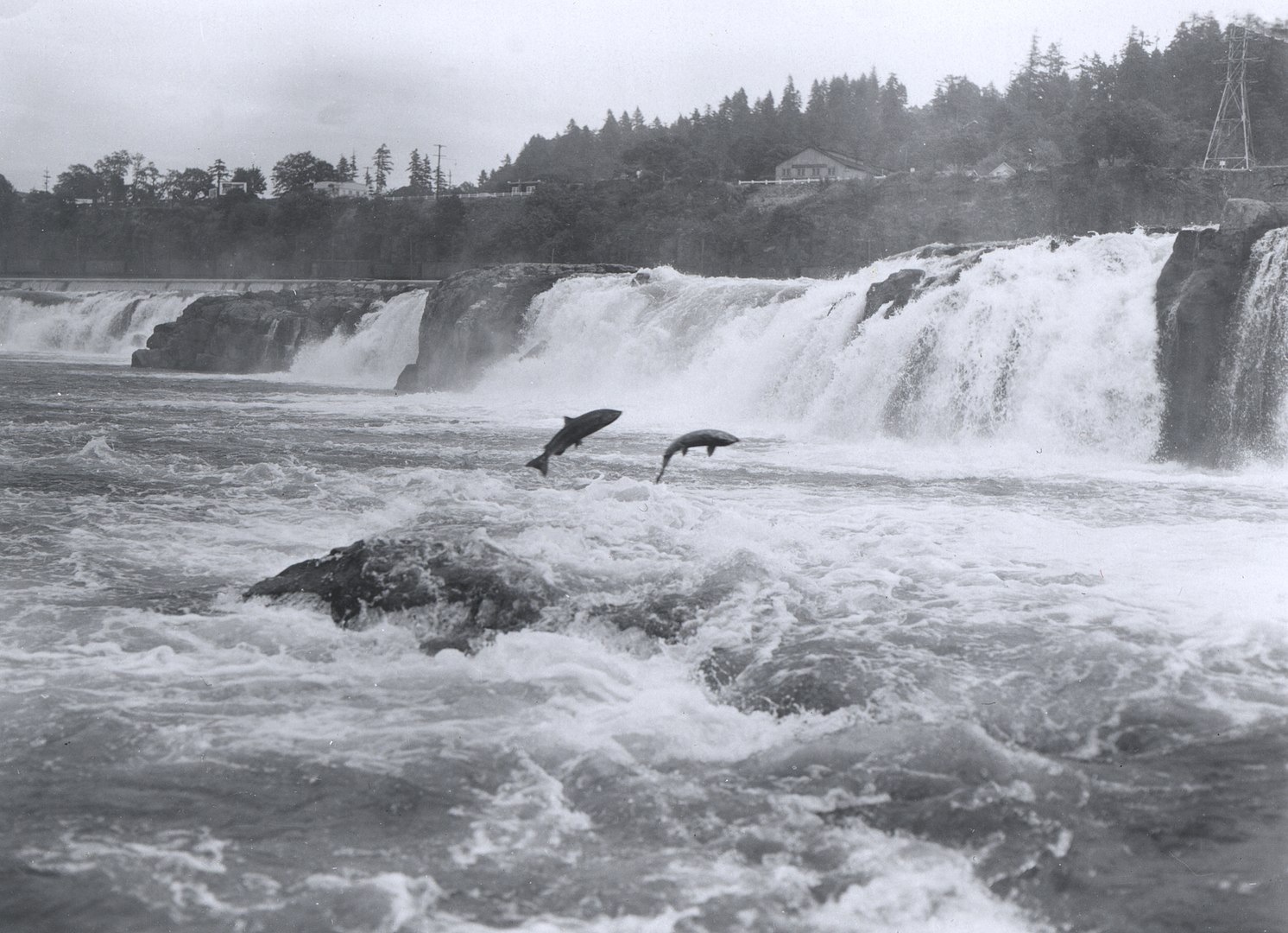 Images/Fishinginthecity/SAC/CAEP/1492px-Salmon_leaping_at_Willamette_Falls.jpg