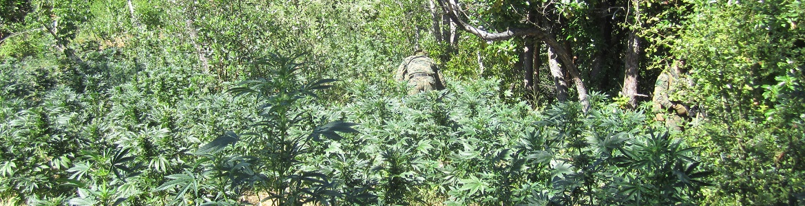 Enforcement team in cannabis field