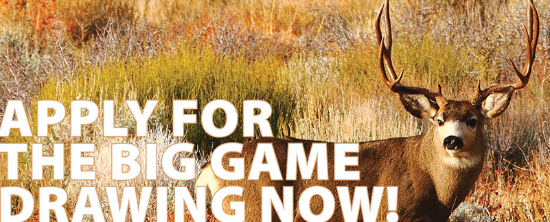 apply for big game drawing