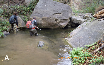 CDFW environmental scientist snorkeling in Gobernador Creek in February 2012