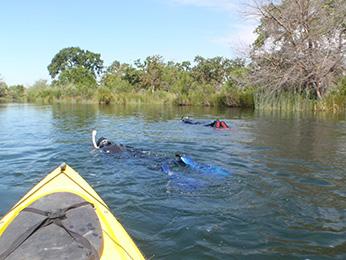 Crews performing snorkel fish counts in Merced River.