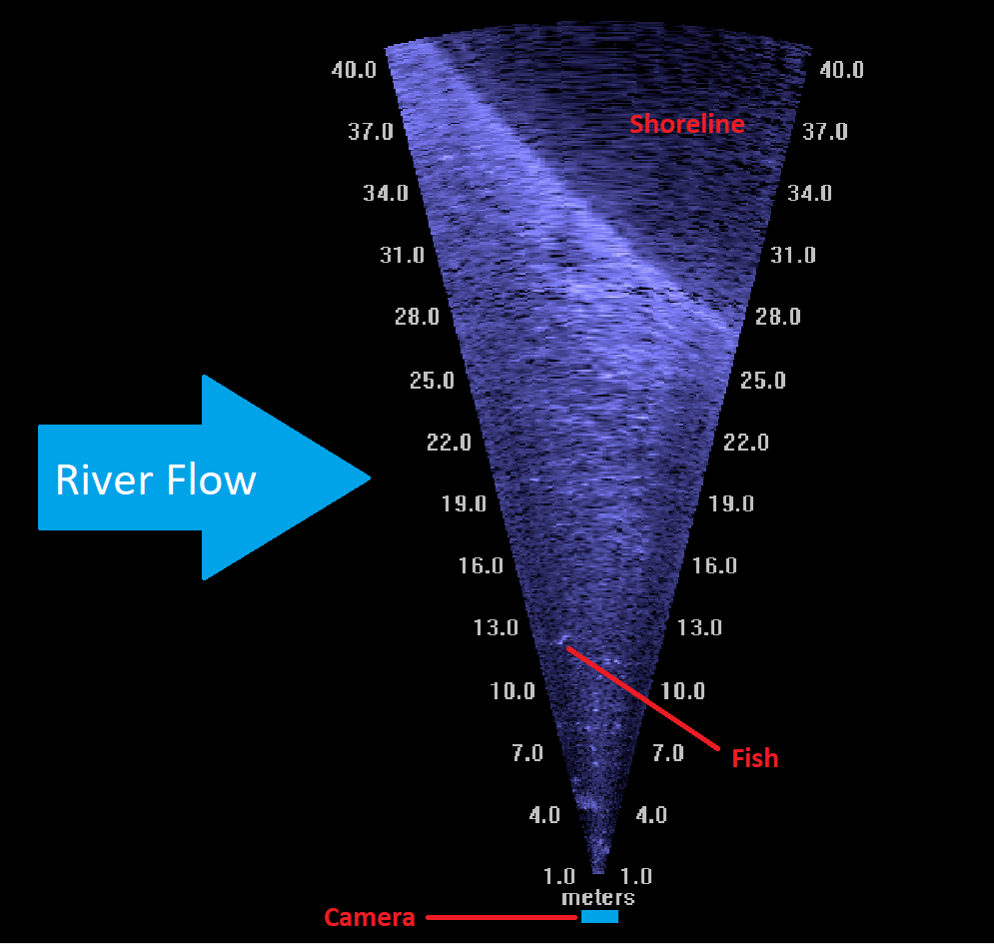 Sonar image showing the camera, shore line, river flow, and a fish