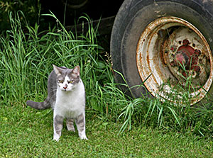 cat standing in grass next to automobile tire