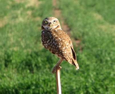 owl perching on wooden stick