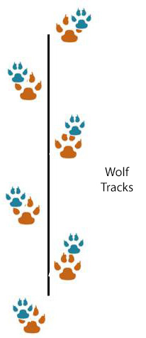 wolf track pattern