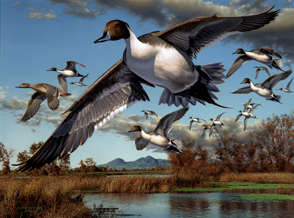 california duck stamp art from 1971 duck hunting clipart free duck hunting clip art outline