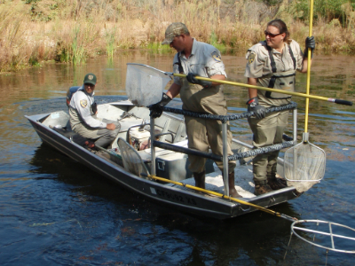 San joaquin river restoration program for San joaquin river fishing