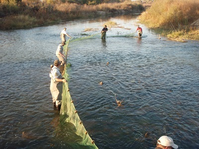 People holding a large net in water