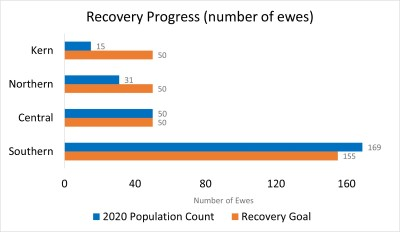 Sierra bighorn progress towards recovery. Southern and Central recovery have mets goals; Kern and Northern have not.