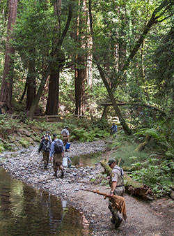 redwood trees with creek and 6 scientist with nets and buckets looking for coho salmon fish with rocks and bushes and sun rays shining through the trees