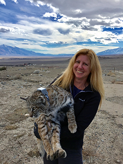 A blonde woman standing on a dry grass plain holds a large bobcat wearing a gray transmitting collar, under a partly cloudy, bright blue sky