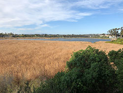 Buena Vista Lagoon surrounded by dry grass with blue sky