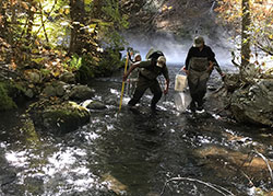 Four scientist are backpack electro fishing in a creek with rocks and trees