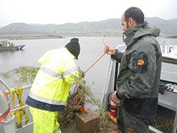 two scientist placing recycled Christmas tress in the lake to provide warmwater fish habitat