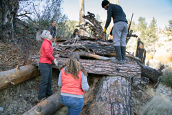 Two women and a man build a bear den of fallen logs and forest materials in the wilderness