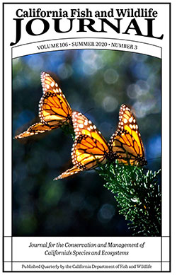 two orange and black monarch butterflies