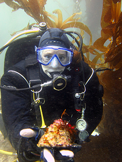 SCUBA diver in kelp forest holds large sea snail