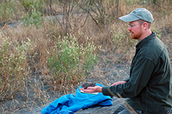 A man holds a gray dove on his open palm, in scrub-brush habitat