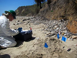 A woman wearing a hard hat and white Tyvek protective suit collects samples from the sand on a southern California beach