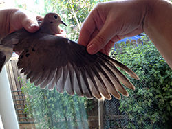 A woman's right hand holds a dove's right wing outstretched