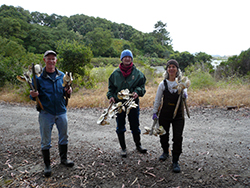 Two women and a man wearing mud boots, carry 18-inch stakes with clam shells attached, in an ecological reserve
