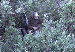 scientist Justin Dellinger in deep brush and trees checking his tracker to find collard mountain lions