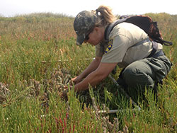 scientist using a pvc pipe grid to survey mice in a grassy field
