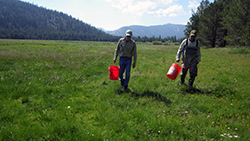 two men carrying buckets in a vast, green mountain meadow