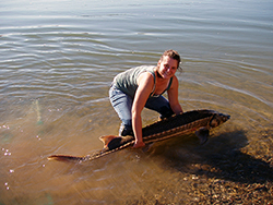 In the shallow water at river's edge, a woman returns a five-foot-long green sturgeon to the water