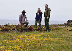 2 cdfw scientist and a cdfw warden standing in san mateo bay near a field of yellow leptosiphon flower patch