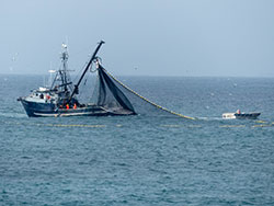 fishing fleet ship using a net to catch squid on the ocean - click to enlarge in new window