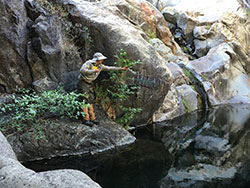 scientist standing on a rocky ledge throwing a net into a river with bushes in background