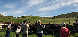 5 ranchers stand around penned cattle on grassy pasture