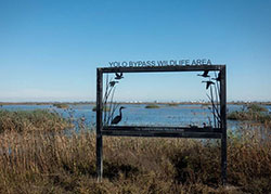 yolo bypass sign with tall grasses water blue sky in horizon