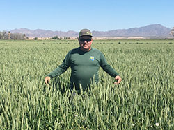 scientist Richard Francis standing waist deep in green wheat with blue sky and mountains in the back