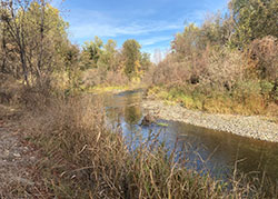 Sacramento River side channel of slow cooling water for salmon with rocky banks and dense shrub
